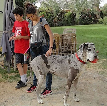 Children With a Great Dane